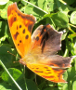 Butterflies represent transformation and its the theme of Expanding Horizons