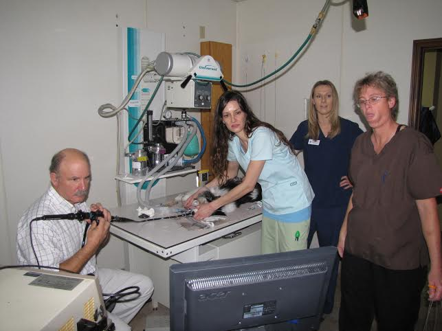 Doctors at AVDH perform an on-site endoscope procedure on a dog.