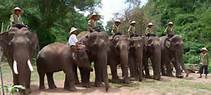 Visit Green Hill Valley Elephant Camp