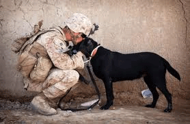 Soldier in Iraq shows love to his black lab