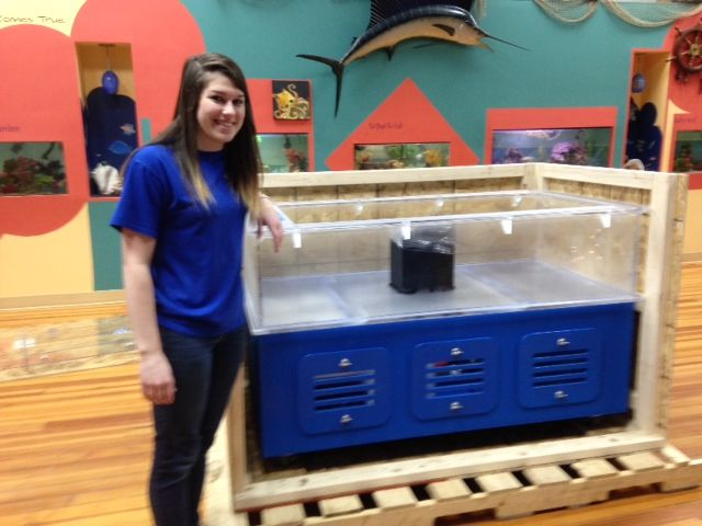 Purpose Built Touch Tank Arrives At Wnc S Team Ecco Asg