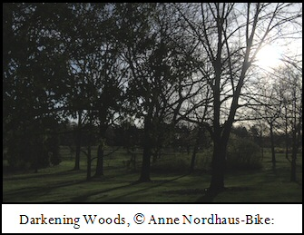 Darkening Woods photo by Anne Nordhaus-Bike.
