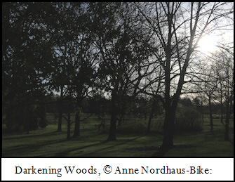 Darkening Woods photo by Anne Nordhaus-Bike.