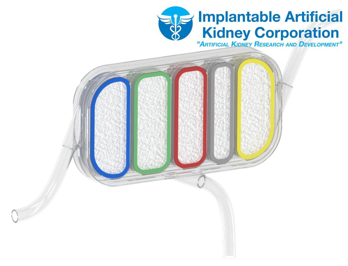 Kidney-Image-10-19-13