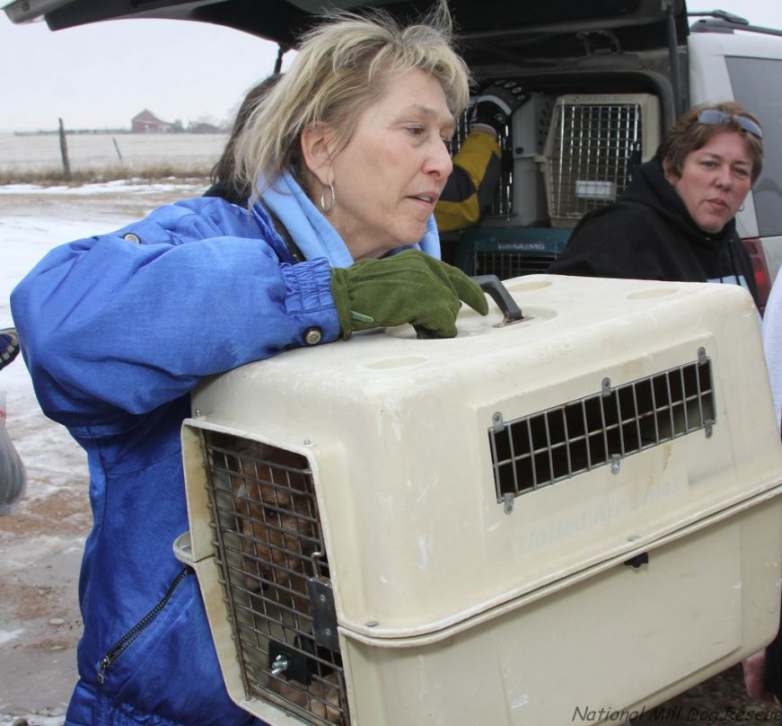 National Mill Dog Rescue volunteer unloads puppy mill dog from rescue van.