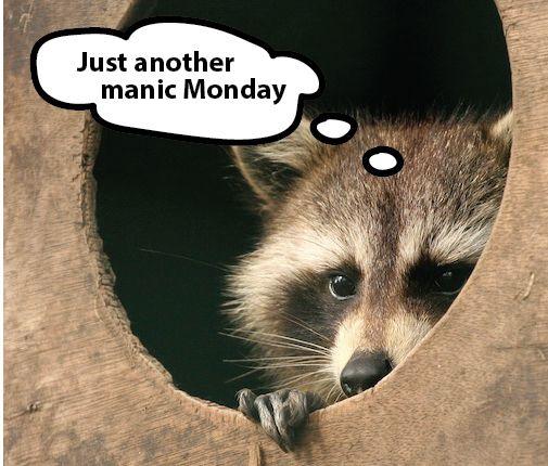 """""""Manic Monday"""" lyric courtesy of the Bangles"""