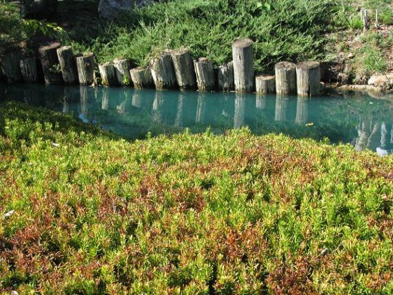 Japanese Garden, Missouri | Diaspora Engagement Platform Helps People & Nations.