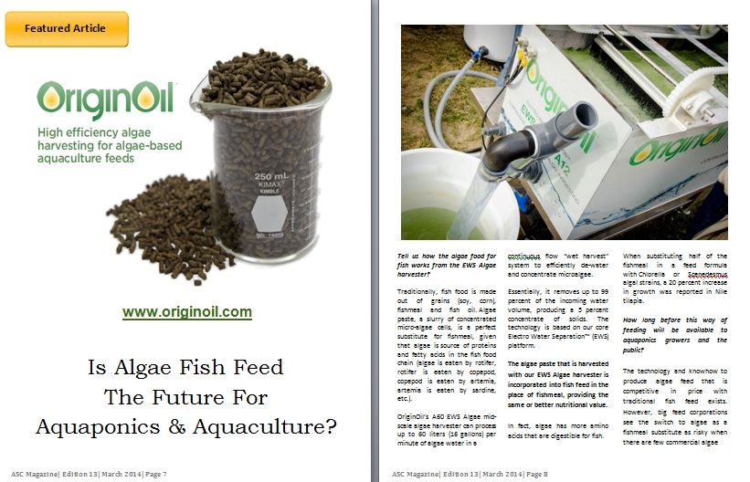 algae_article