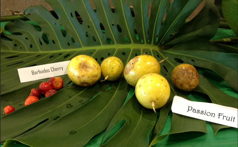 PB's Rare Fruit Council to Host TROPICAL FRUIT TREE & PLANT SALE  March 29 in WP