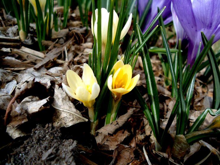lili hudson flowers