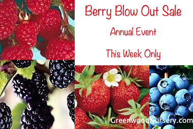 Buy Berry Plants Online