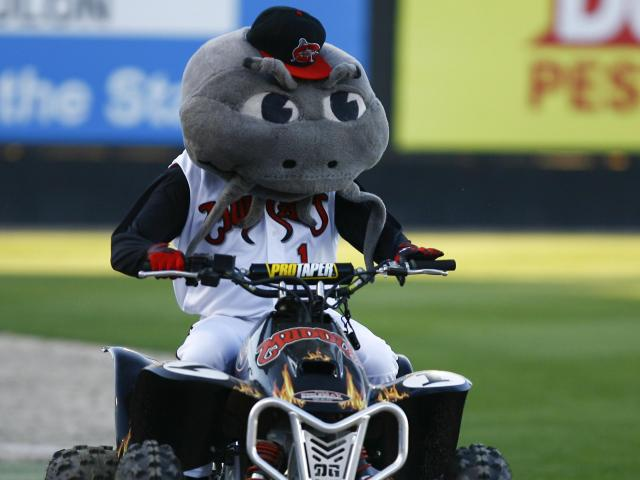 Muddy, mascot of the Carolina Mudcats