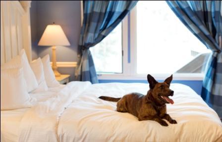 Lanier Islands has been designated a pet-friendly resort. Credit: Gene Phillips