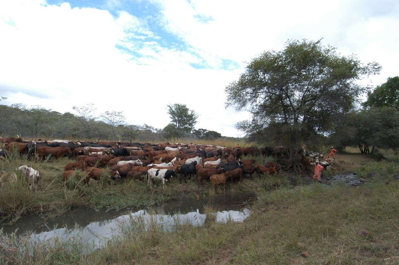 Properly Managed Livestock