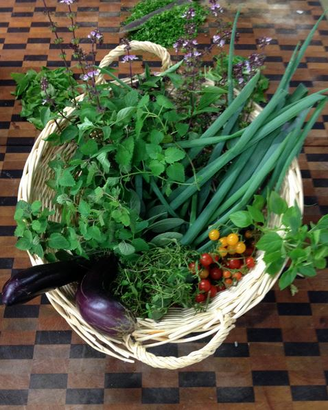 Fresh vegetables and herbs harvested from The Colony's onsite garden