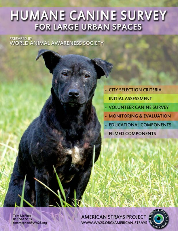 American-Strays-Project-Survey-Proposal-Cover-smal