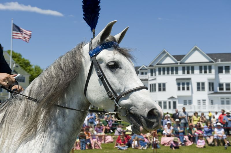 Mackinac Island Lilac Festival | Dog and Pony Show