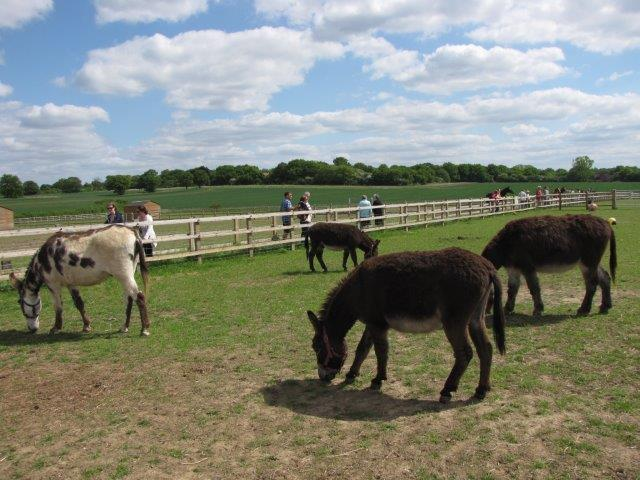 Donkeys at Remus Horse Sanctuary sml