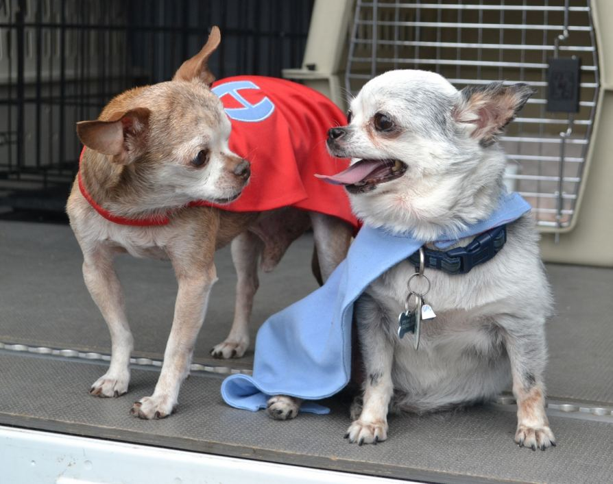 Teddy and Harley prepare to rescue dogs from puppy mills.