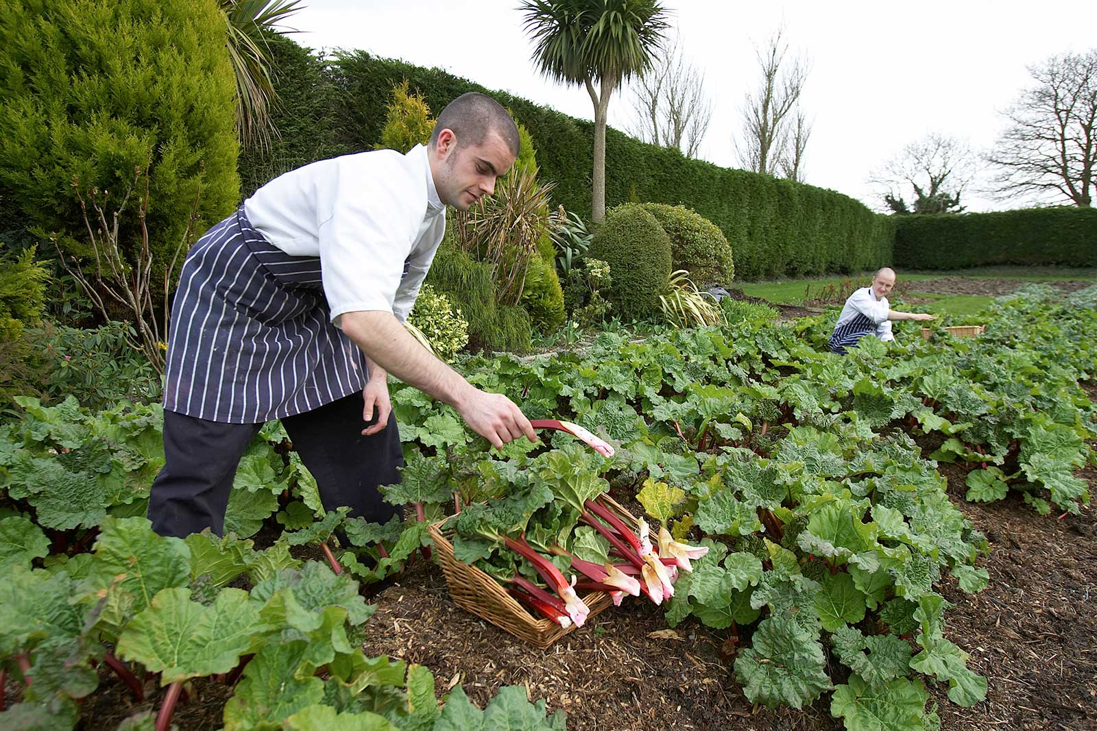 Head Chef Ruadhan Furlong at Marlfield House Kitchen Gardens