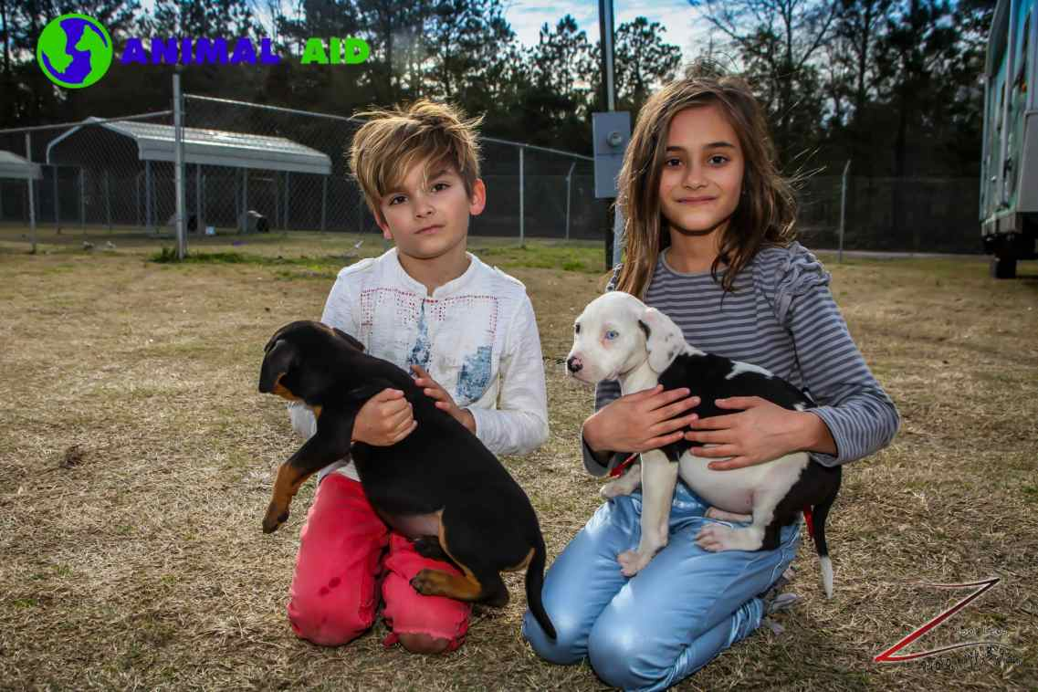 Kids saving shelter animals