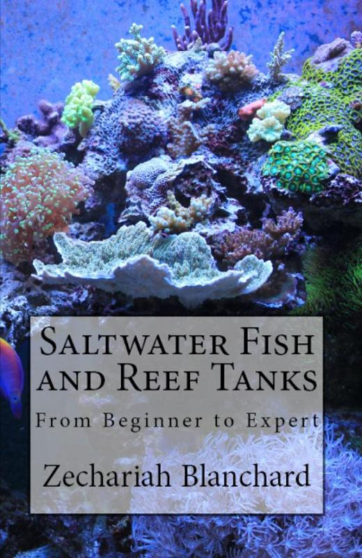 saltwater fish and reef tanks soars to top of fish