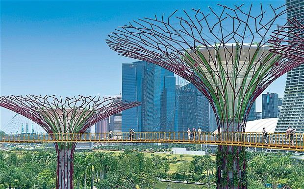 Singapore Super Trees (Photo Credit: i.telegraph.co.uk)