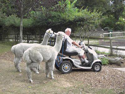 TGA_Mobility_Scooter_Alpacas