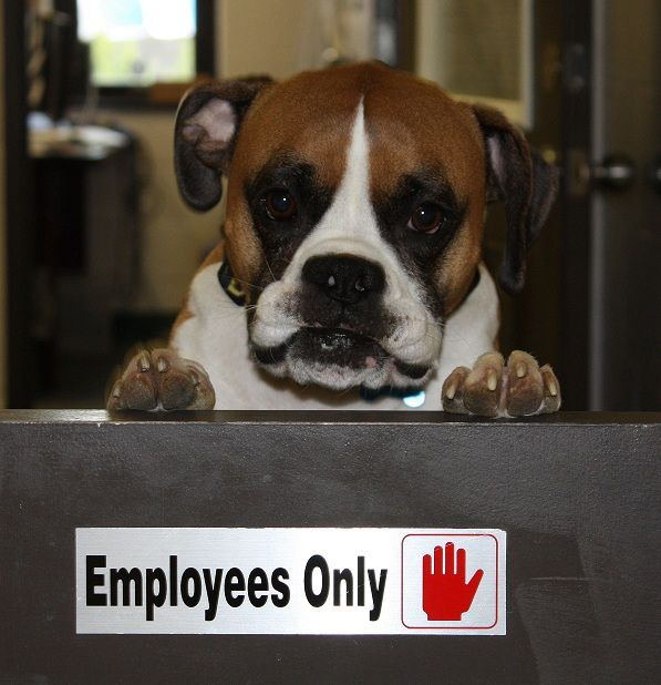 Take Your Dog To Work Day is Friday, June 20