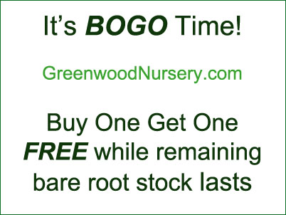 Greenwood Nursery Annual BOGO Free Plants Sale This Week