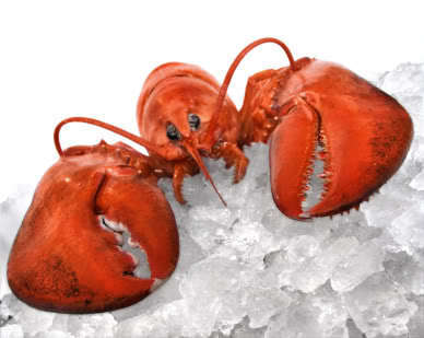 SeaSaltLobster.com