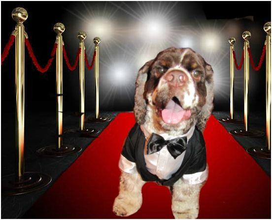 Dexter Bryant, Puppy Relations Manager for Wigglebutt Warriors