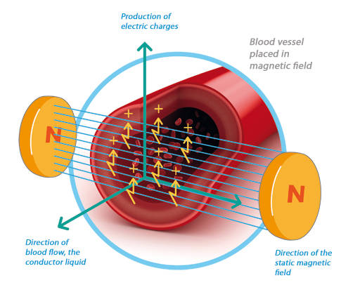 Blood vessel placed in magnetic field