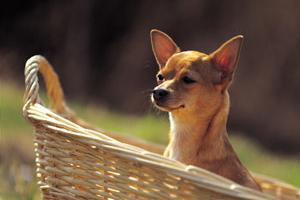 The natural way to relieve allergies in dogs
