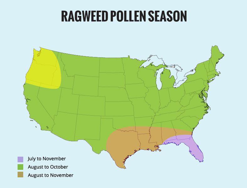 ragweed-pollenseason