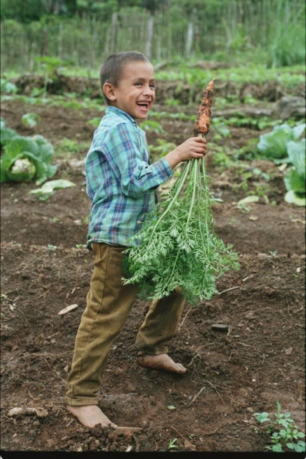 Carrot Boy Honduras