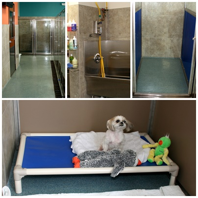 vets in plano, pet boarding hotel for dogs and cats