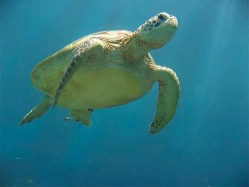 Emerald Coast Turtle Watch