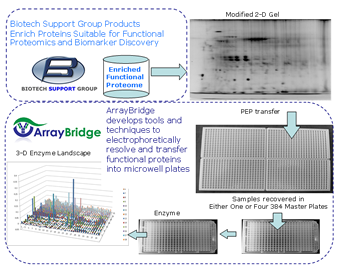 biotechsupportgroup_arraybridge_functionalproteomi