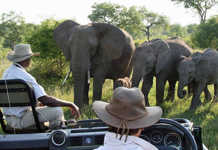 Visiting elephants