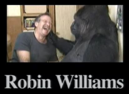Robin Williams in happier times with his gorilla friend Koko