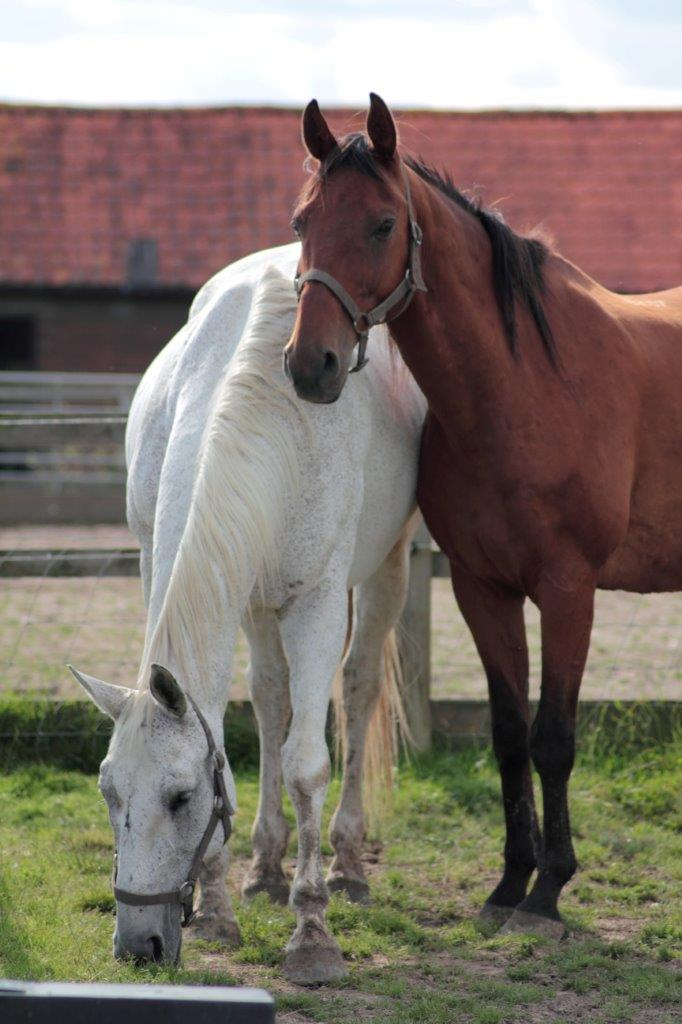Horses At Remus August 2014 sml