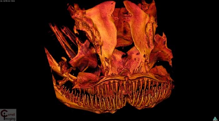 """3D imaging unveils """"alien"""" catfish that baffles scientists"""