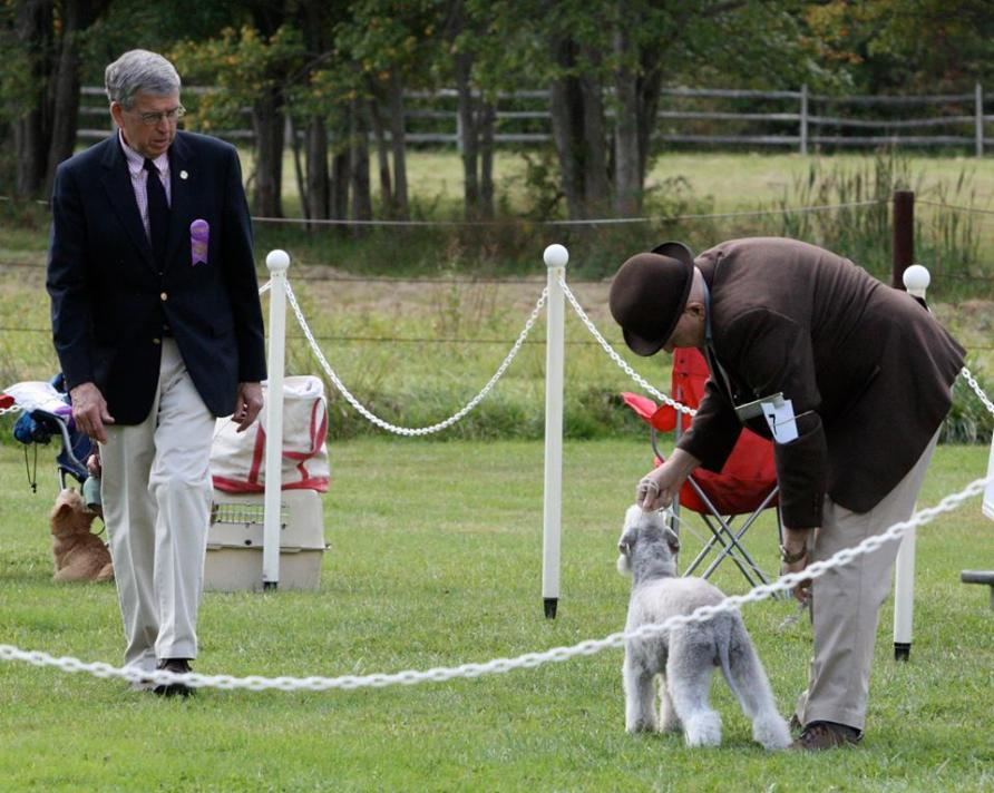 Dave Helming judging terrier shown by Richard Reynolds at 2013 M&E Match Show