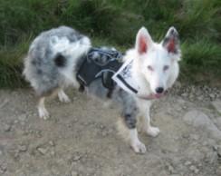 Farah proudly wears her Deaf Dog bandana