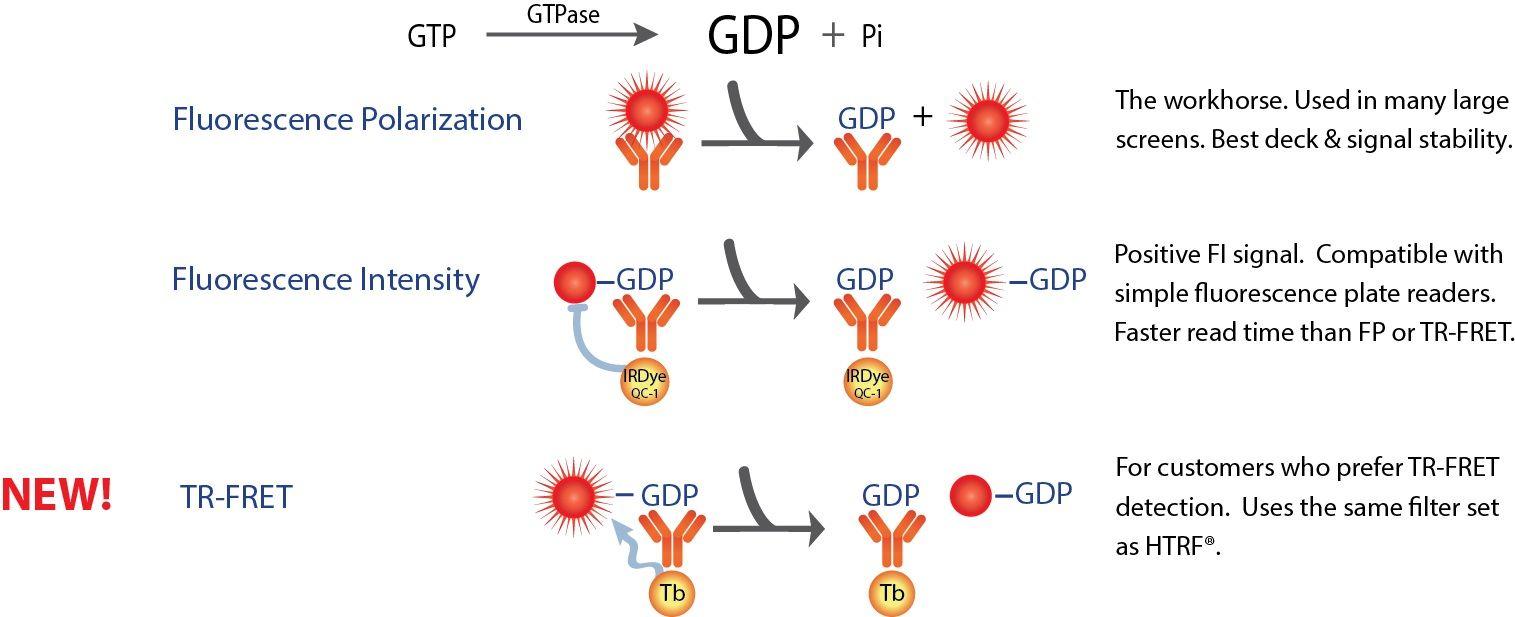 Transcreener GDP Assays