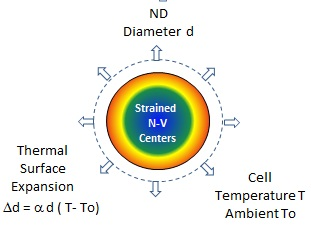 N-V centers under thermal strain induced by temperature change of ND surface