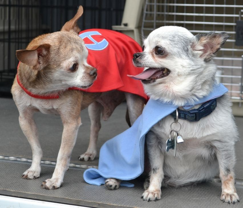 Harley and Teddy, DOGS SAVING DOGS!