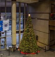 Hamilton County tree 2014 downsized copy