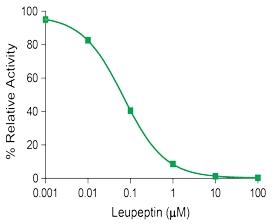 LeupeptideInhibitionMat